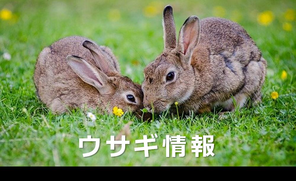 ウサギ情報